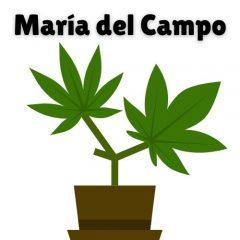 Bienvenidos a www.MariadelCampo.Net – Venta de Marihuana de Exterior organica y de calidad THC&CBD y productos naturales 602174422 whatsapp WICKR XATAX77 mariadelcamponet@gmail.com LOS MEJORES PRECIOS Y CALIDAD SIN PESTICIDAS!